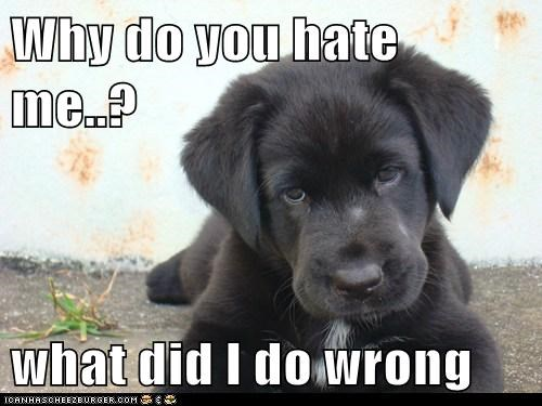 Why do you hate me..?  what did I do wrong