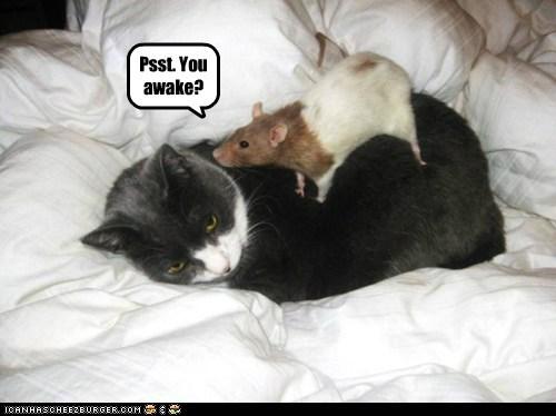 annoyed,rats,awake,Cats,waking up