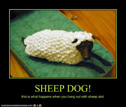 SHEEP DOG!