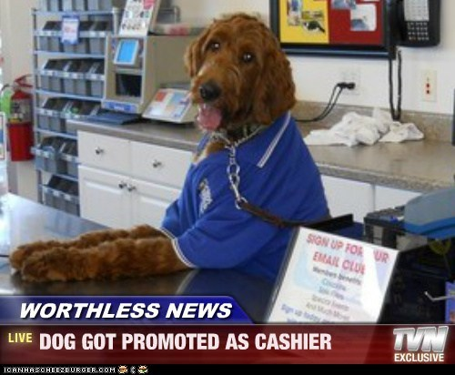 WORTHLESS NEWS - DOG GOT PROMOTED AS CASHIER