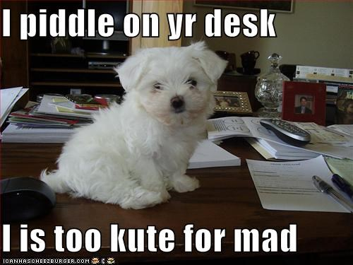 I piddle on yr desk  I is too kute for mad