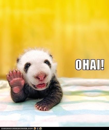 O Hai Panda!