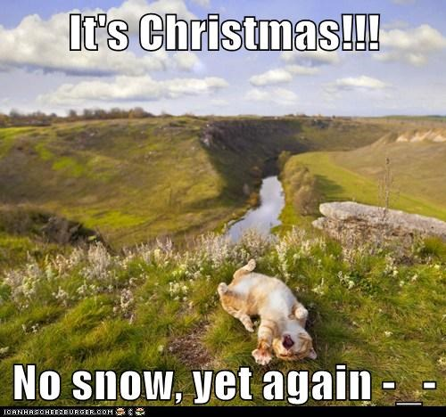 It's Christmas!!!  No snow, yet again -_-