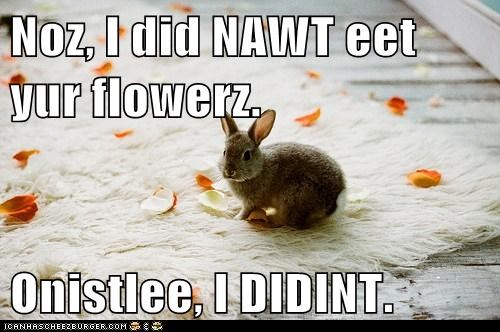 bunnies,honestly,i did not,flowers,eating,guilty
