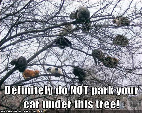 Definitely do NOT park your car under this tree!