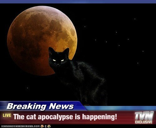 Breaking News - The cat apocalypse is happening!