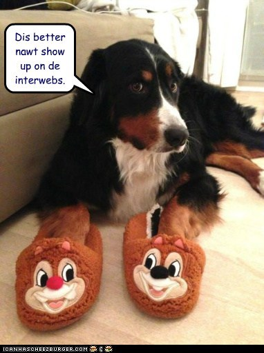 dogs,chip and dale,internet,chipmunks,slippers,what breed