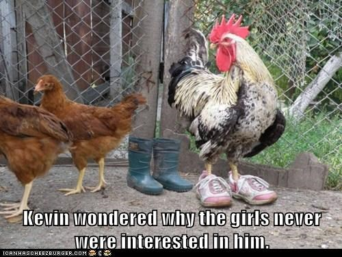 roosters,shoes,girls,chickens,not interested,wonder