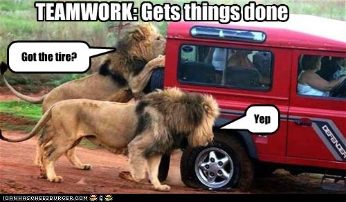 caught,lions,eating people,teamwork,tire,popped