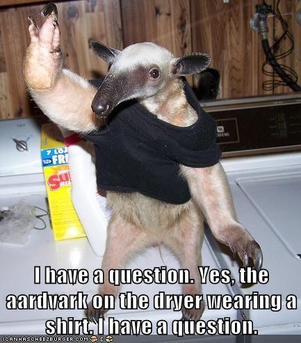 question,aardvarks,raising hand,confusing,washing machine,shirts