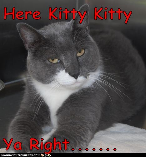 Here Kitty Kitty  Ya Right.......