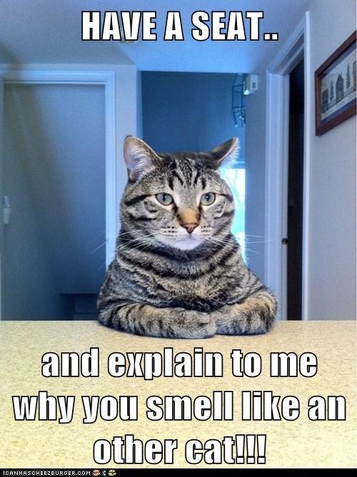 HAVE A SEAT..  and explain to me why you smell like an other cat!!!