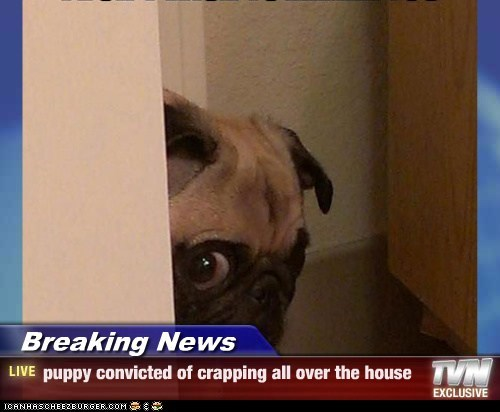 Breaking News - puppy convicted of crapping all over the house