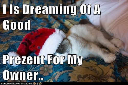 I Is Dreaming Of A Good   Prezent For My Owner..