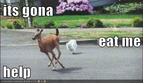 its gona eat me  help