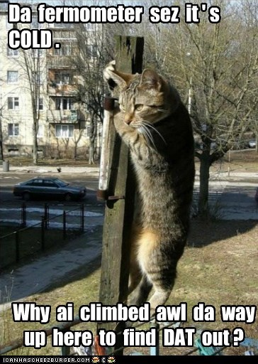 climb,cold,pole,captions,winter,thermometer,Cats