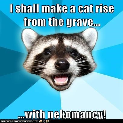 I shall make a cat rise from the grave...  ...with nekomancy!