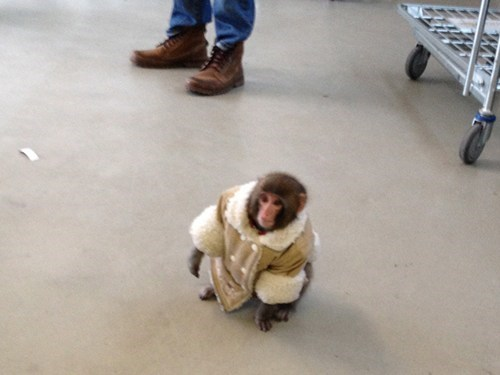 Look at This Well-Dressed Monkey of the Day