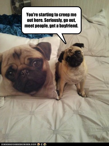 Pillow,stalker,dogs,pug,creepy