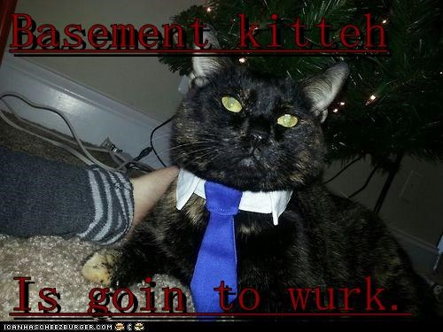 Basement kitteh  Is goin to wurk.