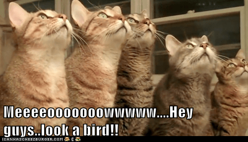 Meeeeooooooowwwww....Hey guys..look a bird!!