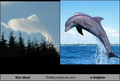 This Cloud Totally Looks Like a Dolphin