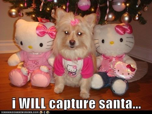 i WILL capture santa...