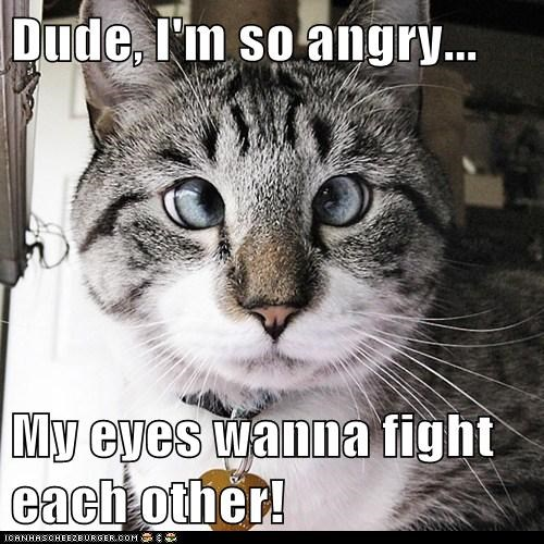Dude, I'm so angry...  My eyes wanna fight each other!
