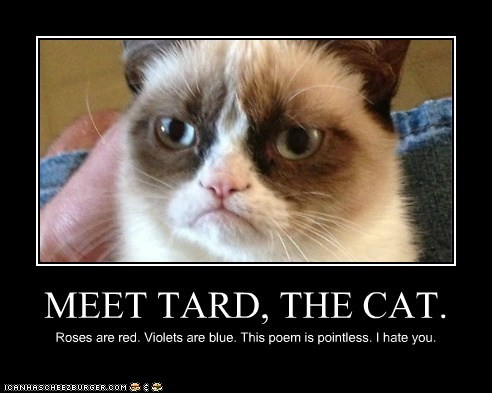 MEET TARD, THE CAT.