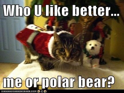 Who U like better...  me or polar bear?