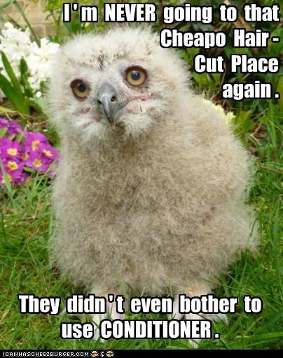 turkmenian eagle owls,Fluffy,feathers,hair cut,conditioner,cheap