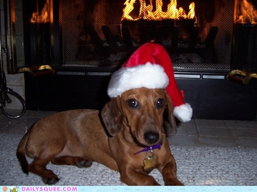 Holiday Reader Squee: Sadie Claus