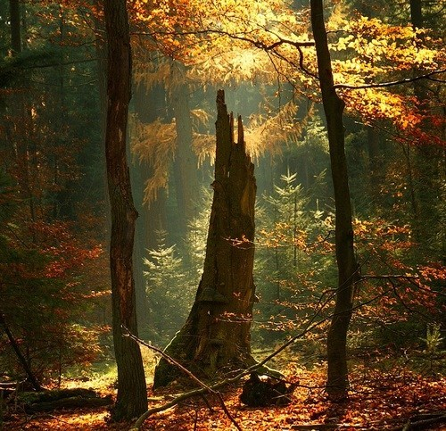 nature,Forest,clearing,camping,destination WIN!,g rated