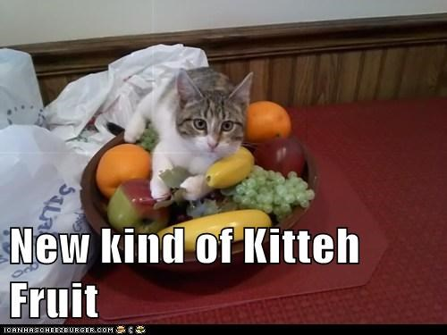 New kind of Kitteh Fruit