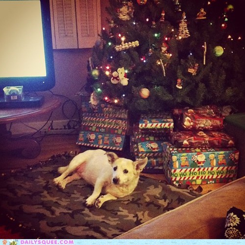 christmas,dogs,presents,reader squee,pets,christmas tree,squee,holidays