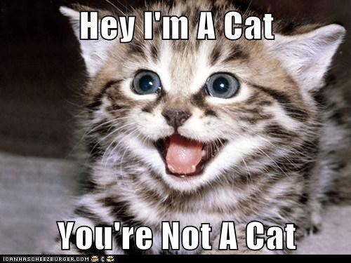 Hey I'm A Cat  You're Not A Cat