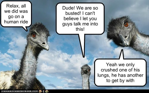 lungs,hurt,ride,ostriches,emus,Staring,relax