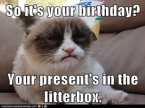 So it's your birthday?  Your present's in the litterbox.