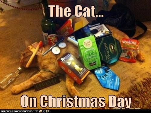 The Cat...  On Christmas Day