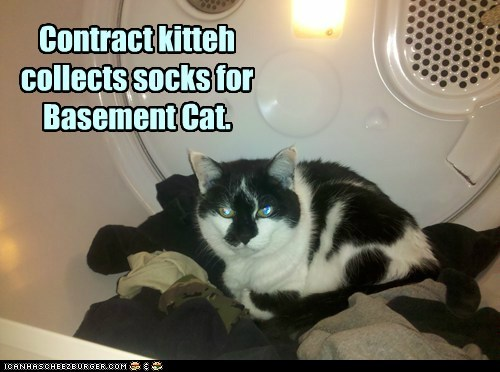 basement cat,laundry,dryer,socks,captions,Cats