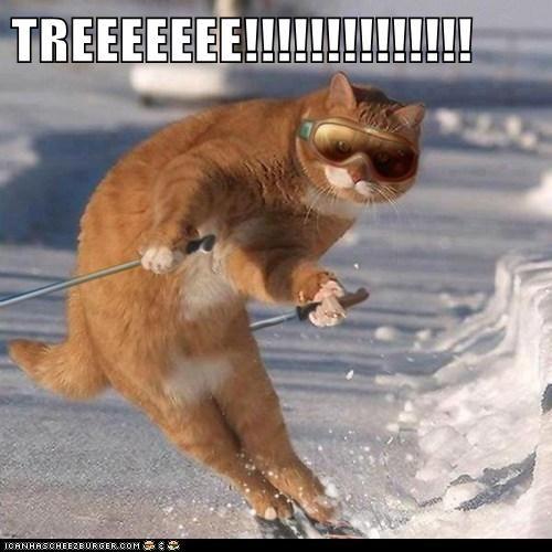 TREEEEEEE!!!!!!!!!!!!!!