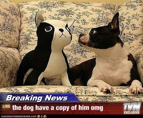 Breaking News - the dog have a copy of him omg