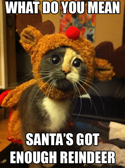 Sad,christmas,santa clause,reindeer,captions,costume,santa,Cats,holidays