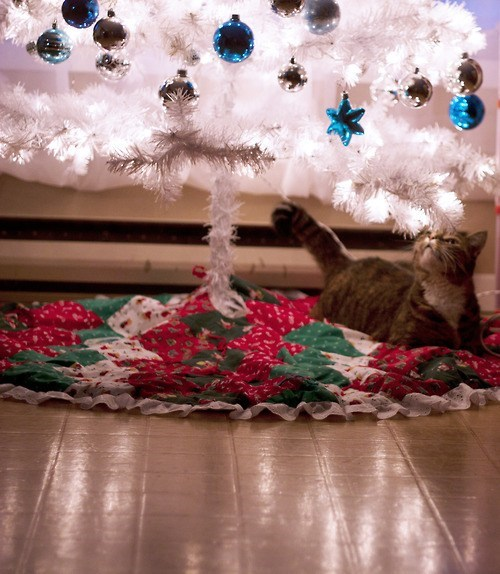 cyoot kitteh of teh day,christmas,trees,christmas trees,Cats