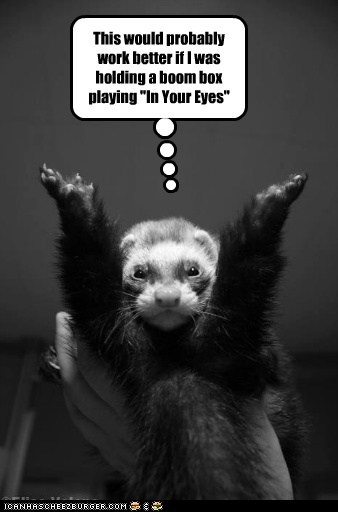 It's Ok Lil' Ferret, We Forgive You Anyway...