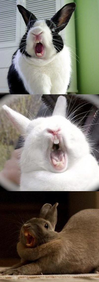 Bunday,scary,yawning,creepicute,bunny,squee,rabbits