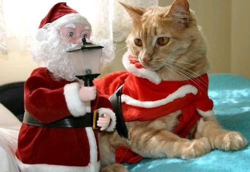 The 25 Days of Catmas: This is So Embarrassing!  I Can't Believe We Both Showed Up in the Same Outfit!