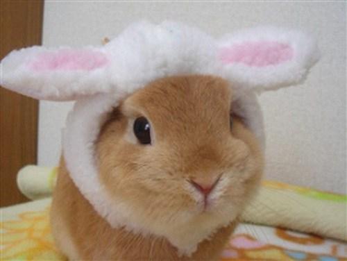 Bunday,costume,bunny ears,rabbit,bunny,squee