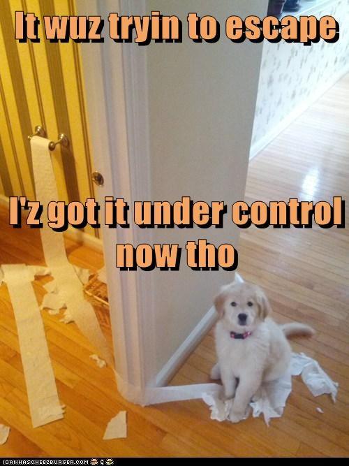 It wuz tryin to escape I'z got it under control now tho