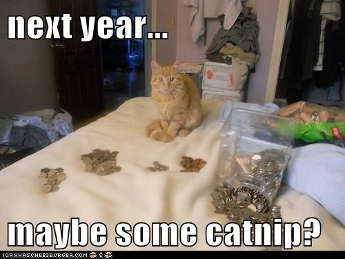 next year...  maybe some catnip?